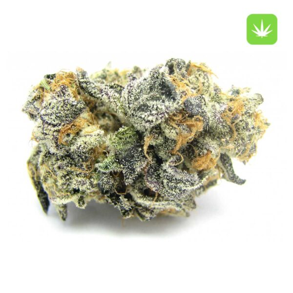 Blue-Cookies—Cannabis-Avenue