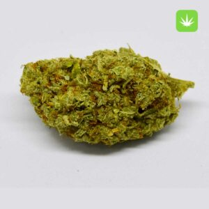 Buy Moby Dick Weed Online