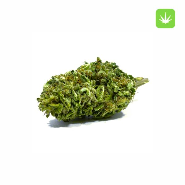 Sensi-Star-Cannabis-Avenue